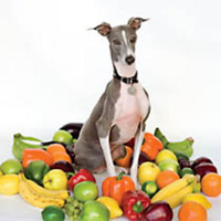 Okładka Shellac - Excellent Italian Greyhound